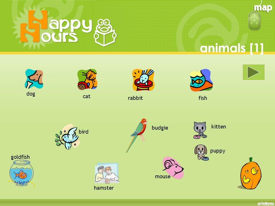 animals [1] dog cat rabbit fish budgie kitten bird puppy goldfish